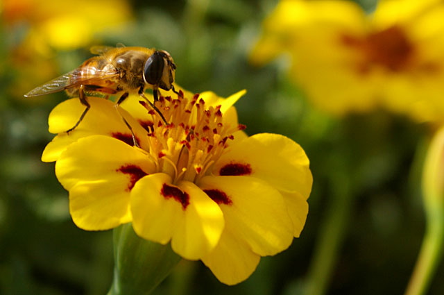 a bee and flower mutualism relationship